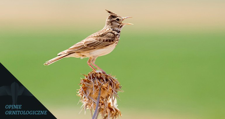 ornitolog poznań